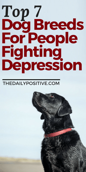 Top 7 Dog Breeds for People Fighting Depression